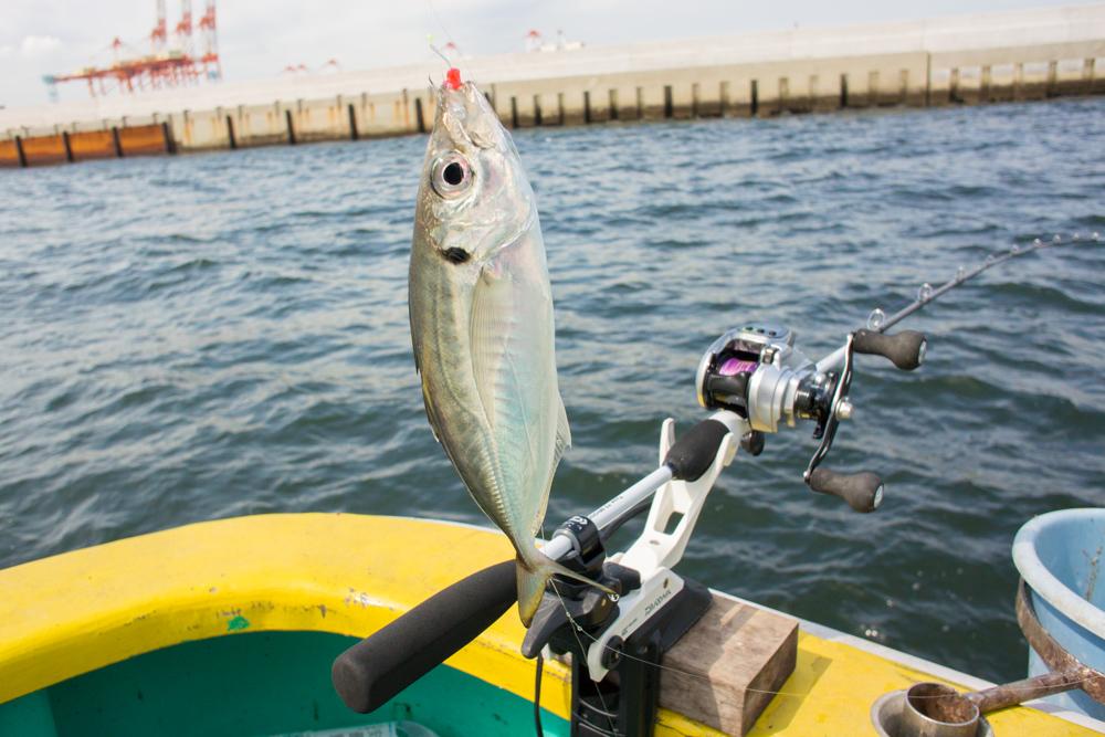 横浜アジ釣り
