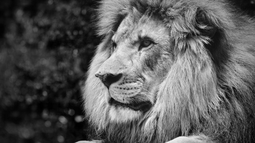 無料の新鋭WordPressテーマ「LION BLOG」